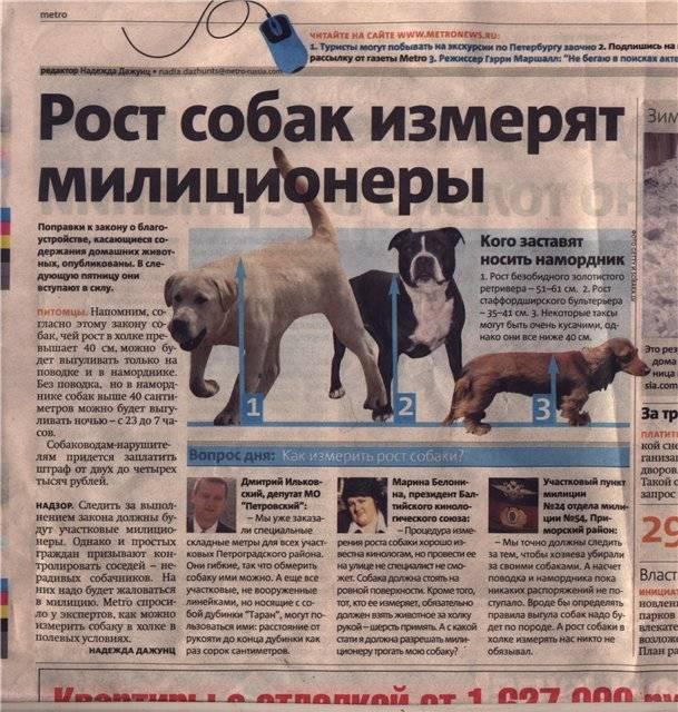 Кормление собак: нормы, время, рацион