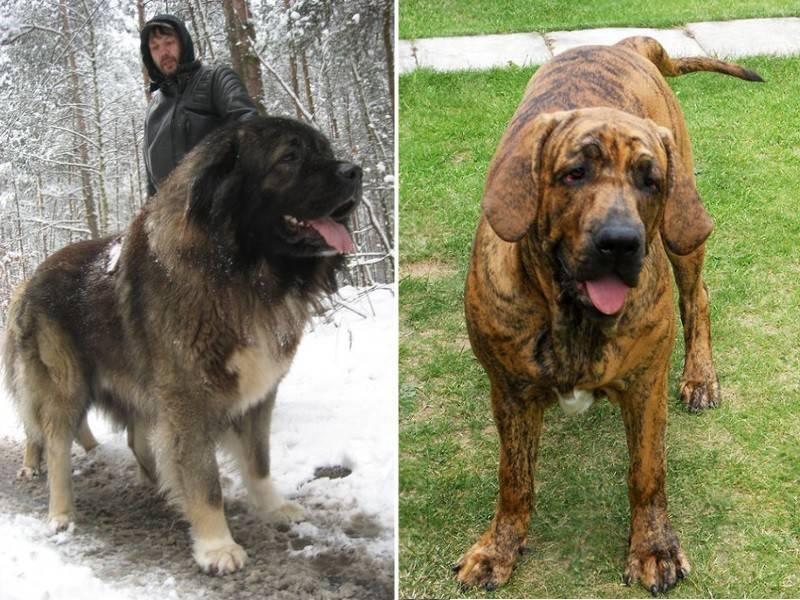 Самые умные собаки в мире: топ-15 крупных, средних и мелких пород