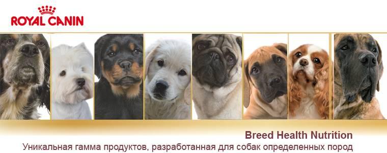 Как можно понять, породистая ли собака, и определить ее породу по внешнему виду или фото?