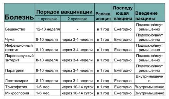 Когда глистогонить щенков: сроки, выбор препарата, особенности применения, отзывы - truehunter.ru