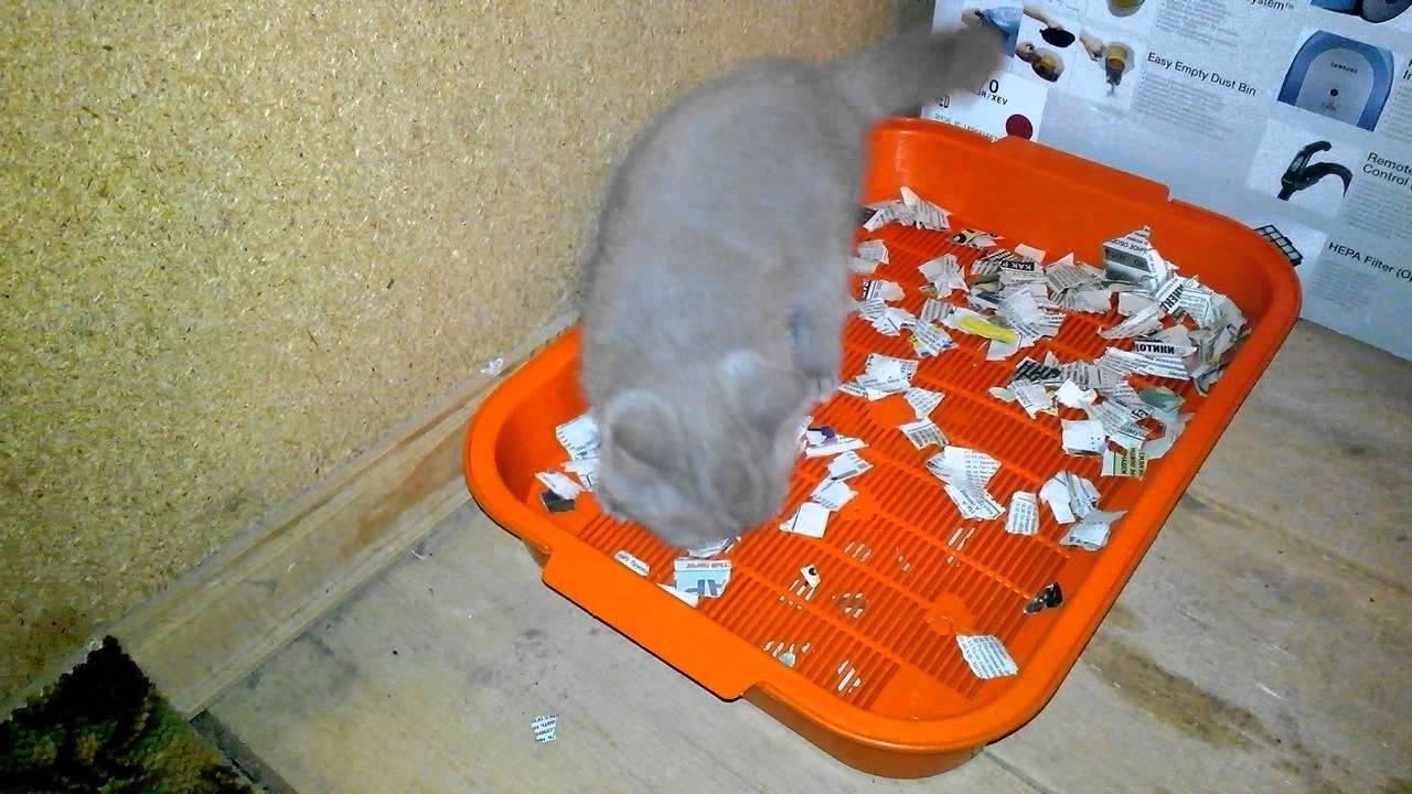 Как приучить котенка к лотку в квартире легко и быстро: проверенные способы, советы и рекомендации