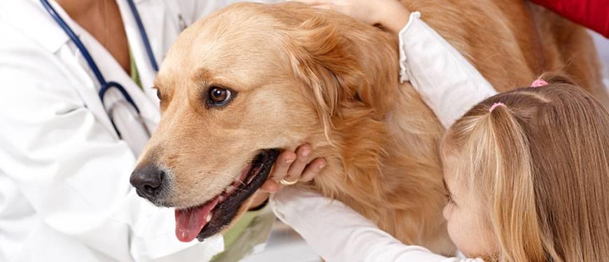 Пододерматит у собак - симптомы и лечение | ветклиника зоостатус