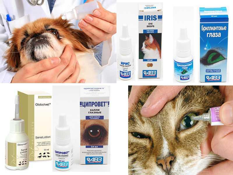Барс (глазные капли) для кошек и собак | отзывы о применении препаратов для животных от ветеринаров и заводчиков