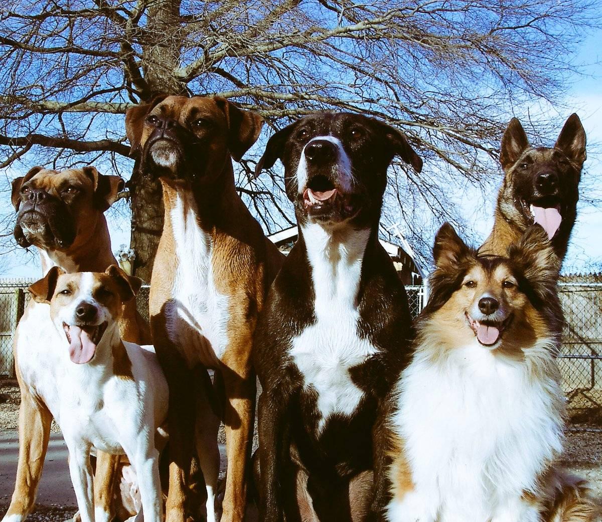 Собаки для семьи с ребенком: обзор 15 пород и правила выбора