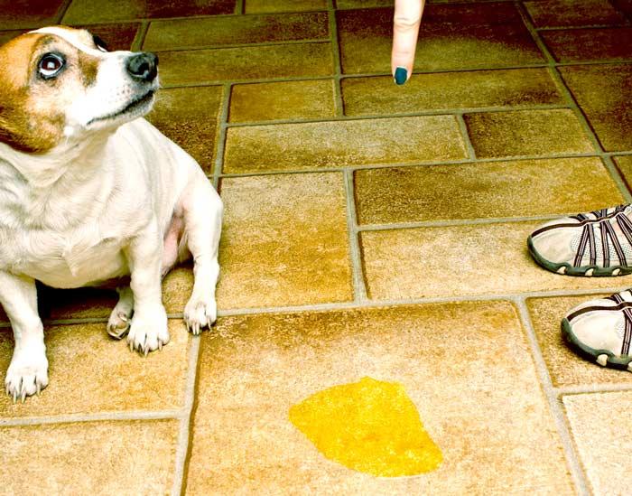 ᐉ как отучить собаку метить - ➡ motildazoo.ru