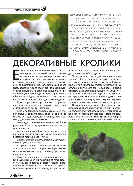 Карликовый кролик: фото, описание пород, особенности содержания домашнего любимца