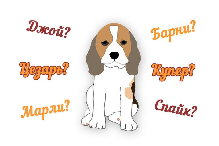 Имена для собак мальчиков (кобелей): как назвать щенка мальчика, красивые клички для собак.