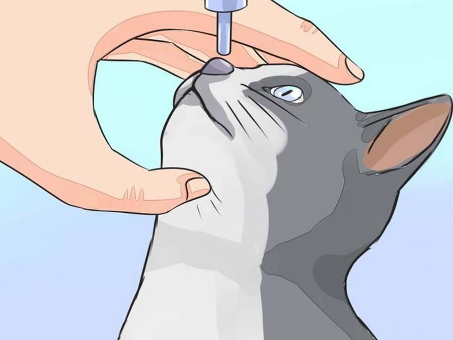 """Аллергия у кошек: виды, причины, симптомы, диагностика, как лечить, прогноз и профилака   блог ветклиники """"беланта"""""""