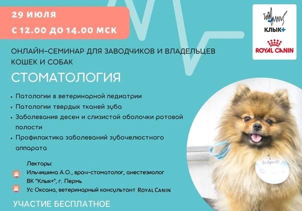 Как открыть питомник кошек: оборудование и необходимые документы для старта :: businessman.ru
