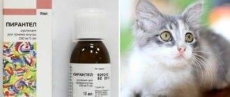 Можно ли глистогонить кормящую кошку: допустимые методы лечения
