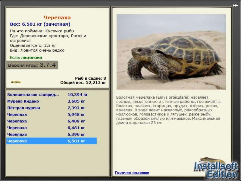 Продолжительность жизни черепах в домашних условиях и на воле