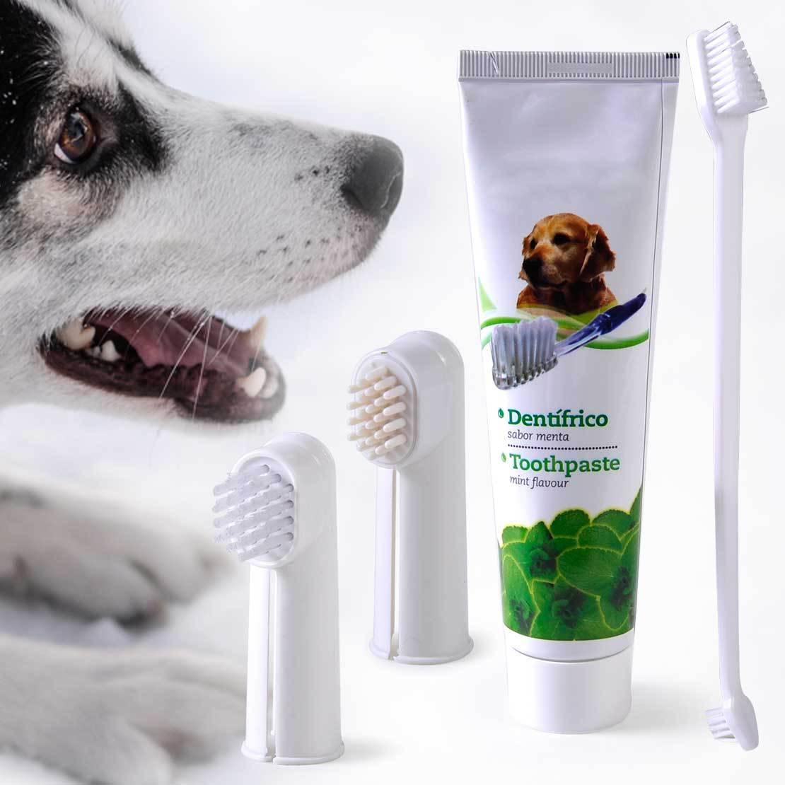 Зубной камень у собак: причины образования, способы удаления,  профилактика появления зубного камня у собак