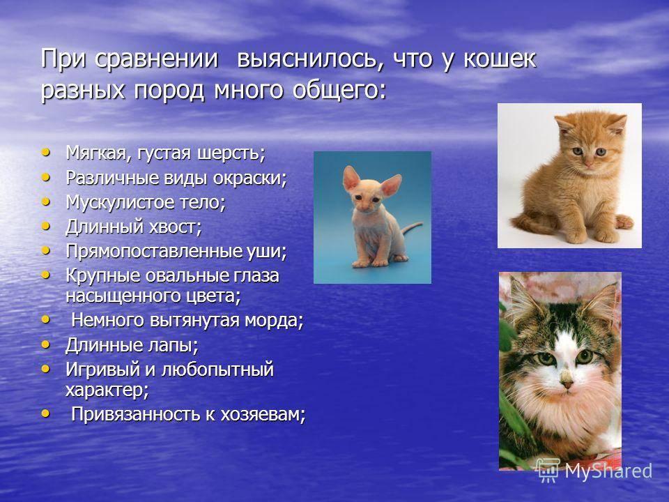 Выделяясь из толпы: подбираем самую редкую породу кошек