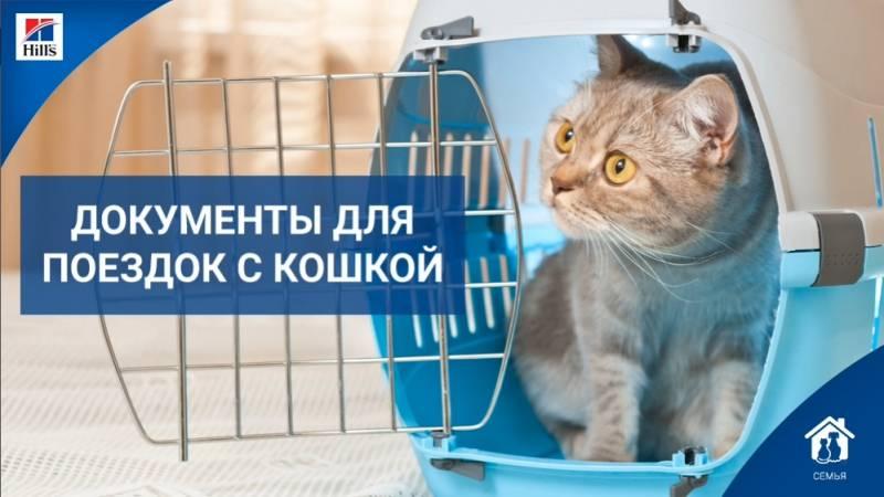 Вывоз собаки (кошки) зарубеж: документы и прививки для пересечения границы (транзита)