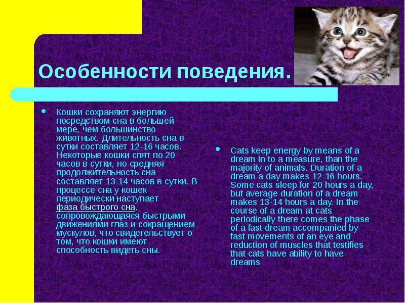 Основные секреты психологии котов и кошек: поведенческие особенности