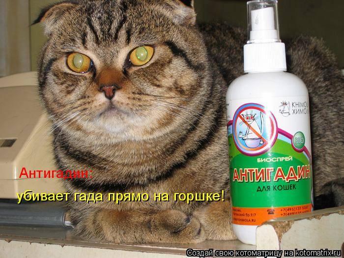 Какой антигадин лучше помогает отвадить кошку, что входит в состав спреев, как сделать средство своими руками?