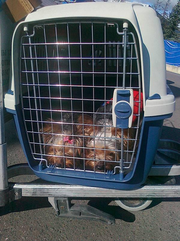 Собака в самолёте: как перевозить и что для этого нужно
