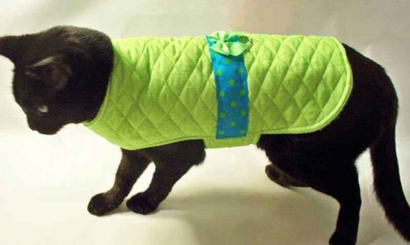Попоны для собак своими руками: выкройки, виды, что такое