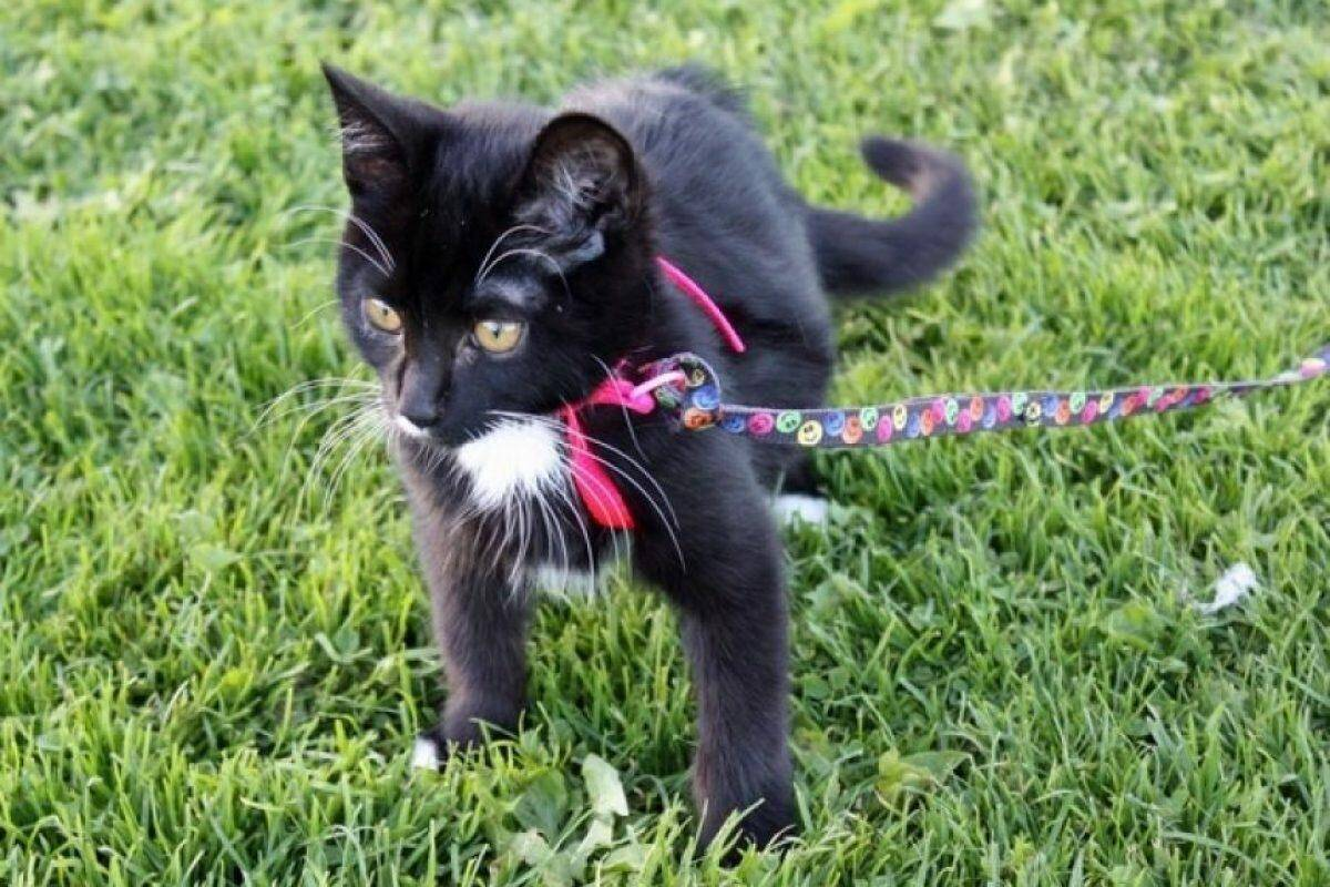 Почему врачи рекомендуют отпускать домашнюю кошку на улицу: плюсы одиночных прогулок, опасности для питомца