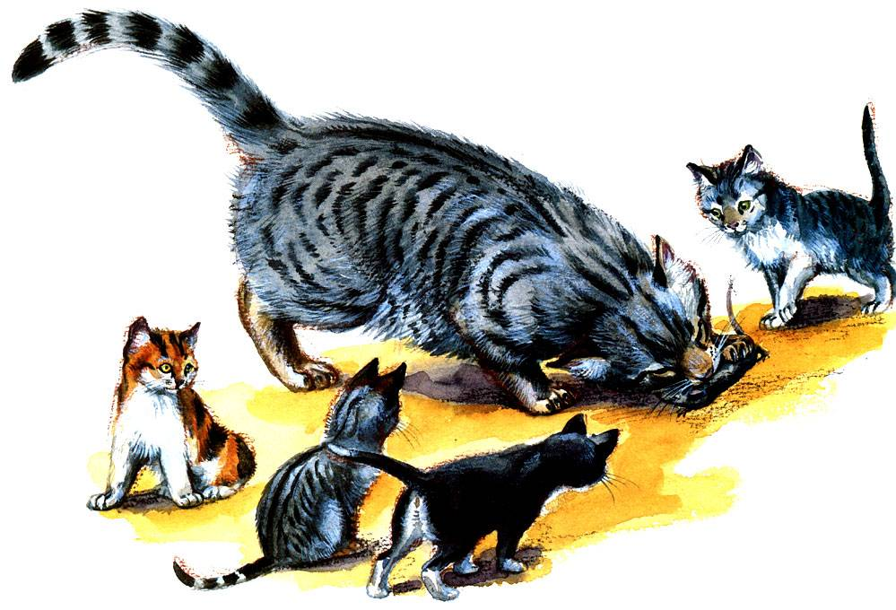 ᐉ кот крысолов порода описание - zoomanji.ru