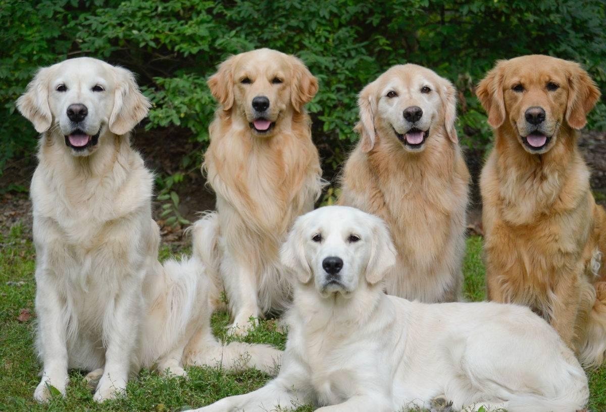 Самые популярные породы собак с фотографиями и названиями | в россии и в мире