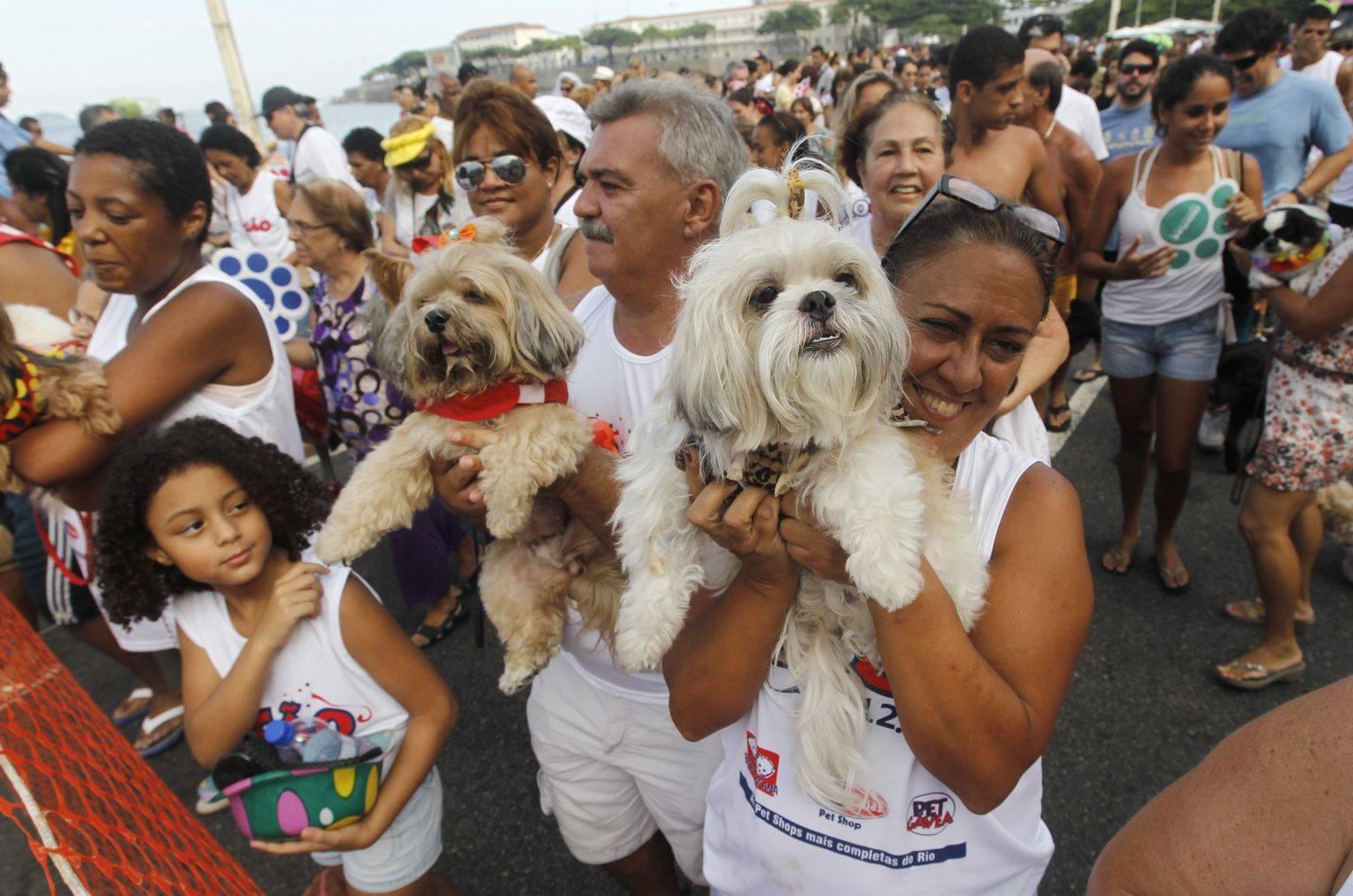Бразильский карнавал в рио-де-жанейро 2021: даты, календарь, билеты онлайн