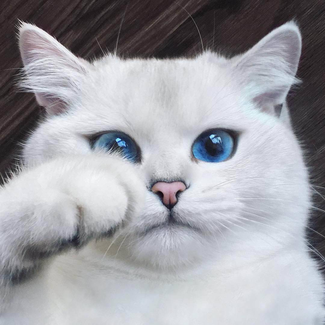 У кота по имени нарния мордочка поделена ровно пополам. 50% милоты и 50% доброты, объясняет хозяйка