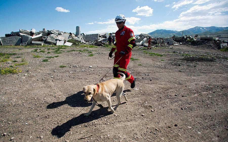 Породы собак-спасателей и их истории