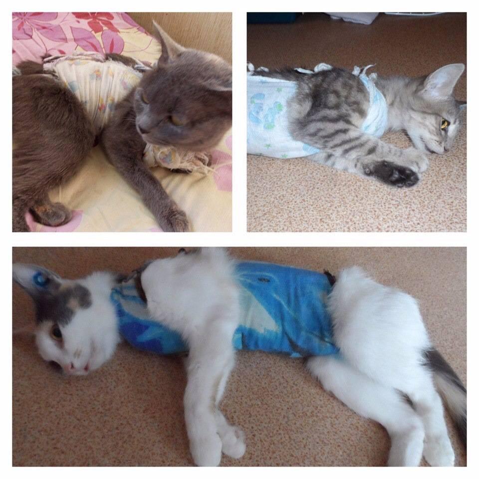 Сколько лет живут кошки в домашних условиях и 10 советов, как ее продлить