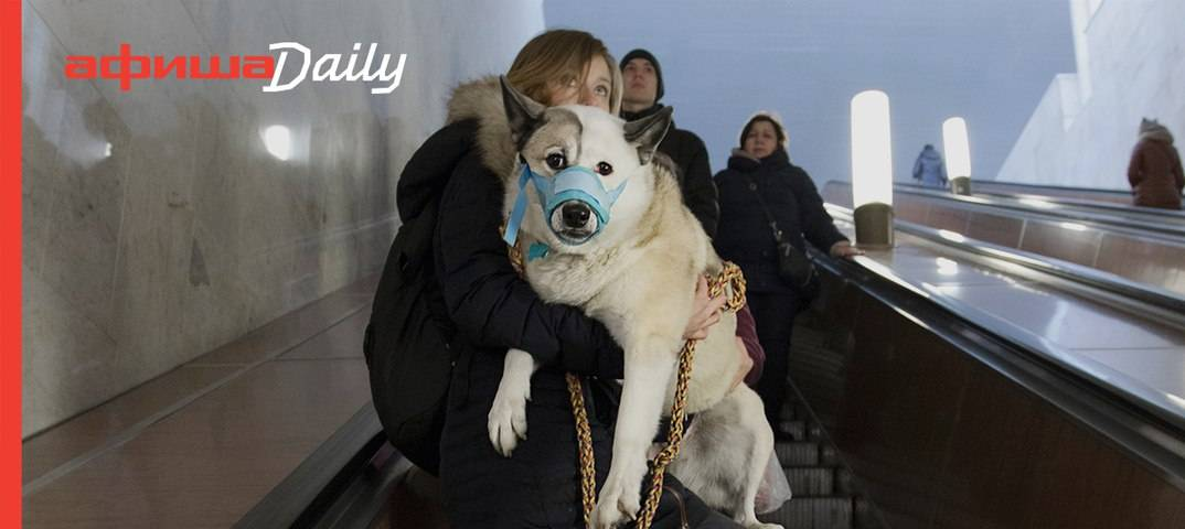 Как правильно перевозить собаку в метро