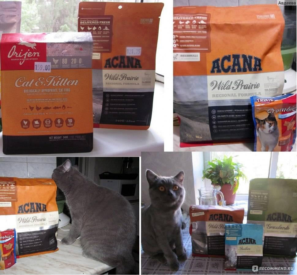 Корм акана: состав, стоимость, отзывы ветеринаров и владельцев кошек