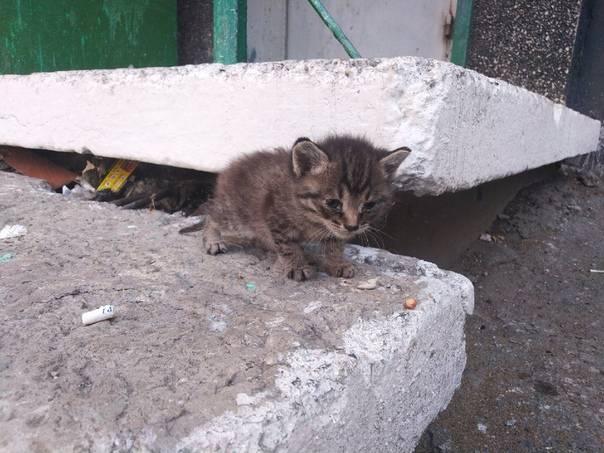 Что делать, если нашел котенка на улице. инструкция с советами волонтеров
