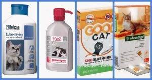 Средство от блох для кошек — обзор наиболее популярных препаратов