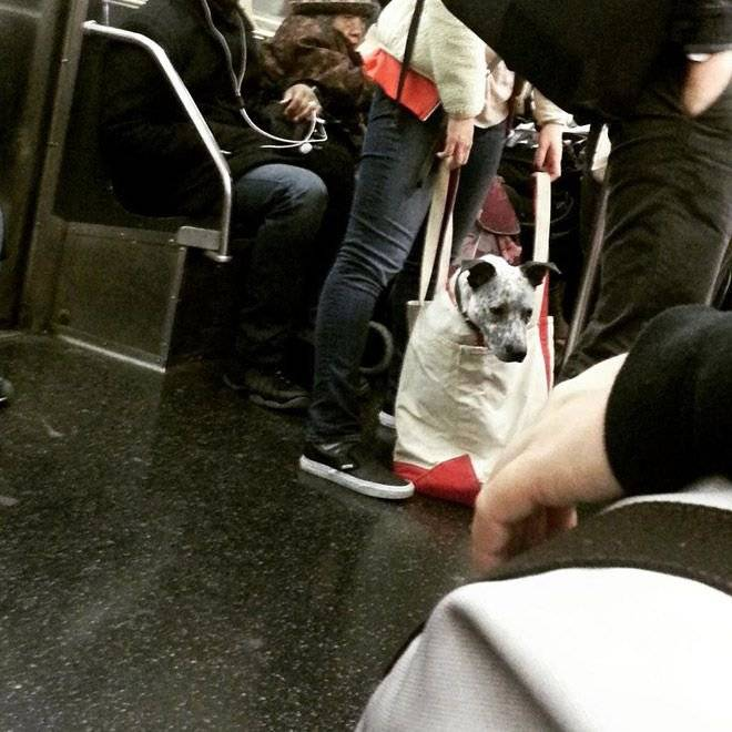 Как путешествовать в метро с собакой