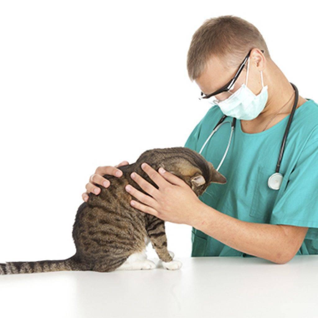 Эпилепсия у животных