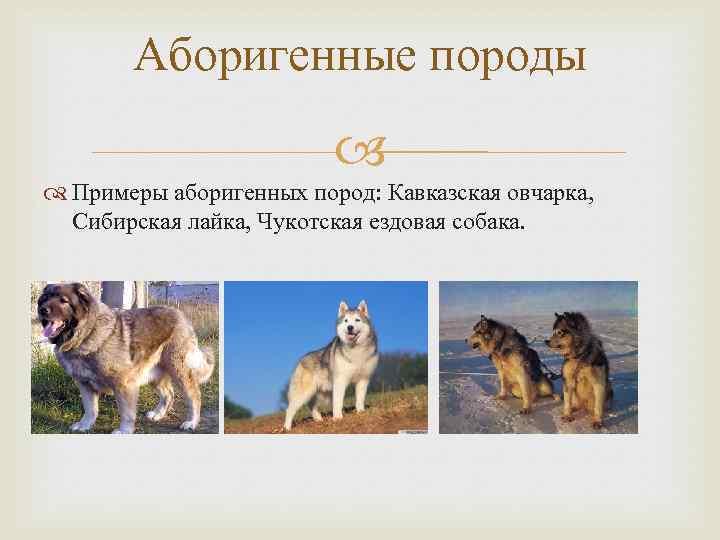 Рубрика: классификация собак по применению