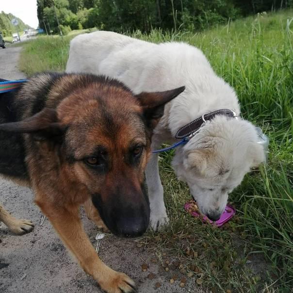 Без человека никак: породы собак, которым нужна особая забота