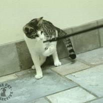 Весеннее обострение у кошек