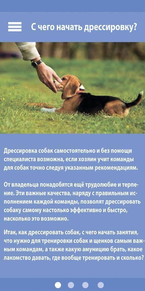 Дрессировка щенков и взрослых собак: особенности и основные команды