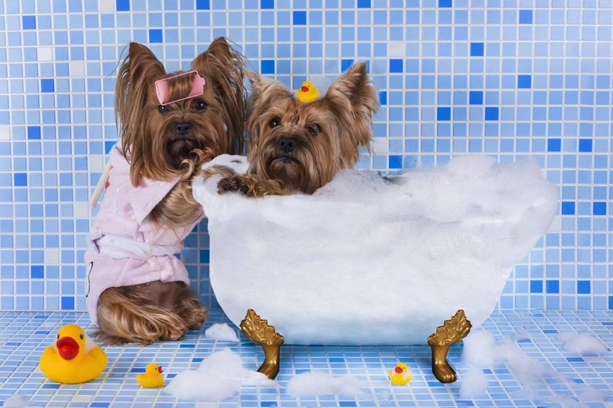 Как мыть собаку: можно ли купать в жару или зимой и после прививки, как правильно избавиться от запаха псины в домашних условиях