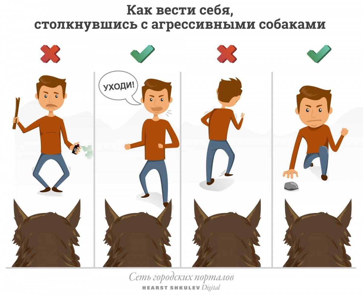 Как взять собаку из приюта: на что обратить внимание