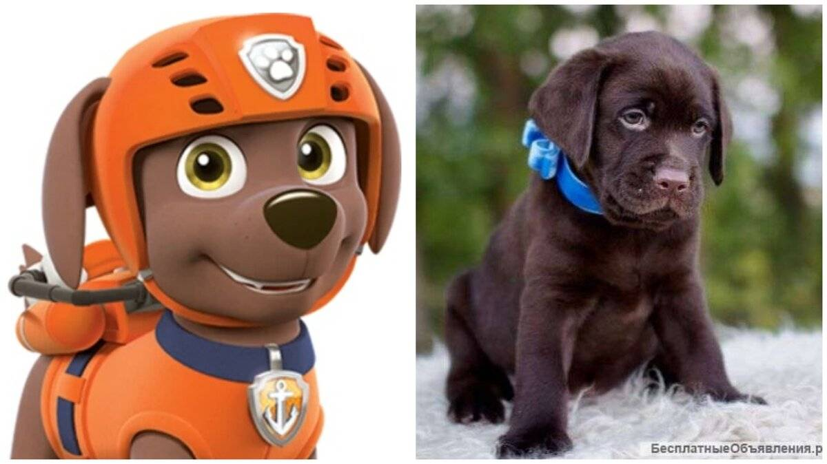 Как зовут героев мультика щенячий патруль. как зовут щенков из «щенячьего патруля»