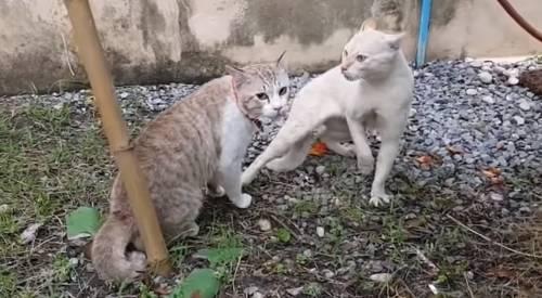 Как подружить в одной квартире кота и кошку