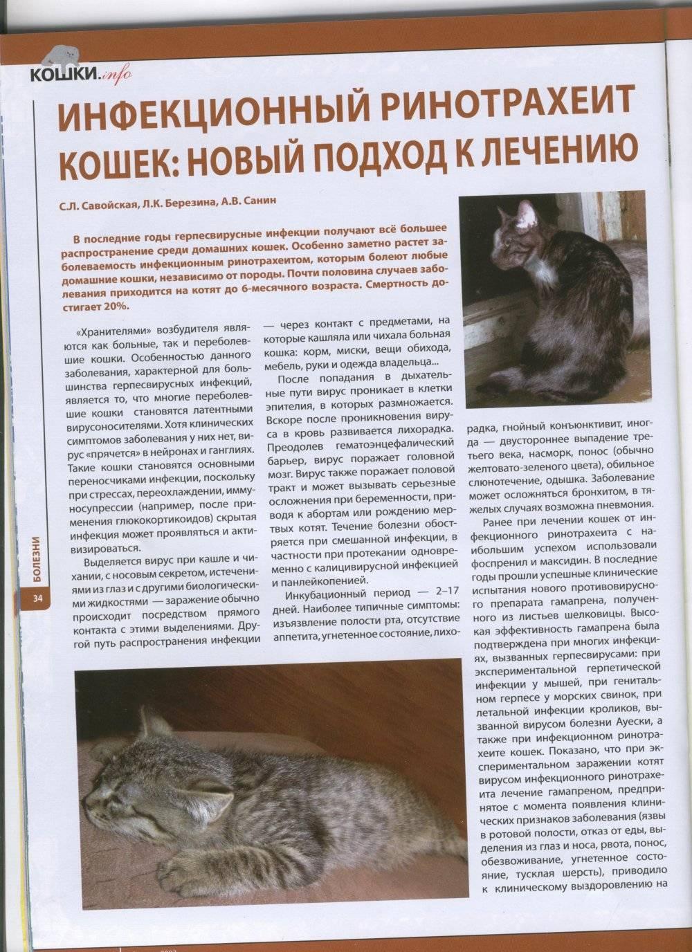 Чумка у кошек - симптомы и лечение