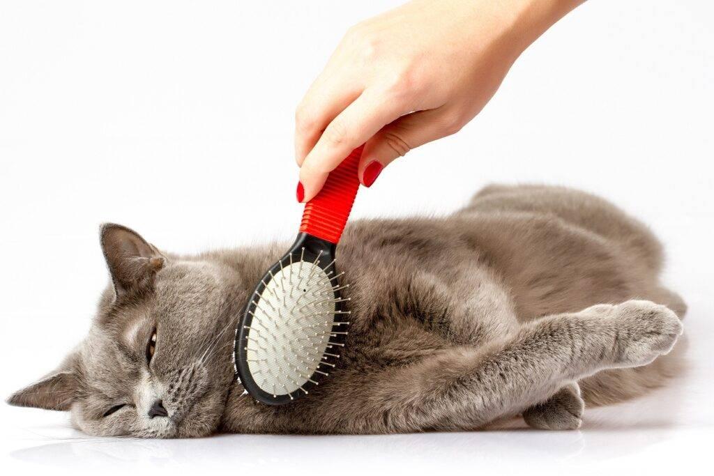 Что делать, если кот линяет