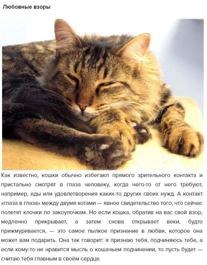 Как понять, что кошка тебя любит: 22 верных признака