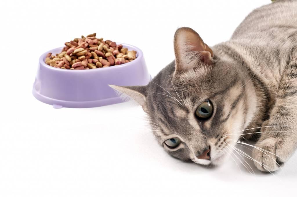 Что делать, если кошка стала плохо есть?