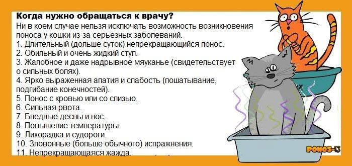 Обезвоживание у кошки — как вовремя обнаружить и вылечить | ветмед