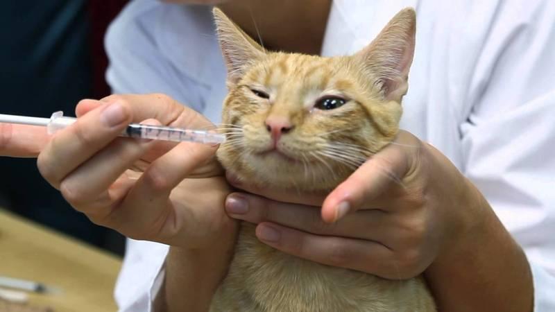 Почему кот кашляет