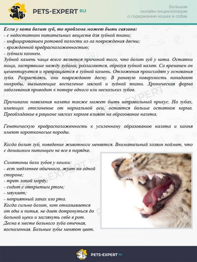 Запах изо рта у кошки: причины и лечение